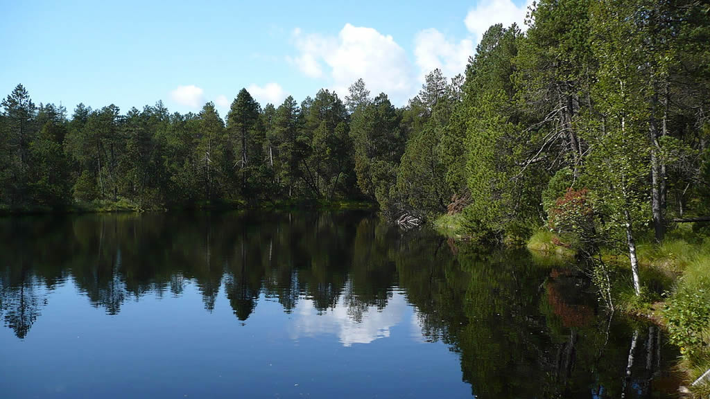 foto: Settlement Rejvíz with mossy pond